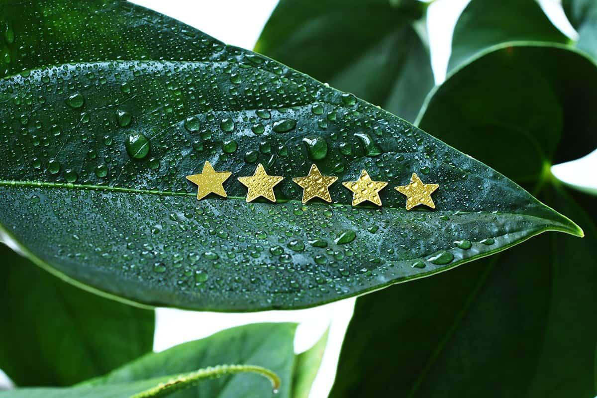 plant shop five stars review
